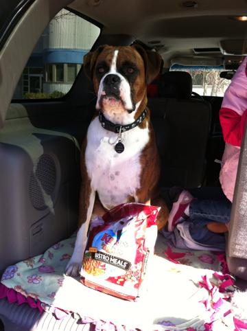 Kibbles 'n Bits Bistro Meals - Jasper