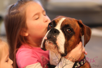 Jasper (Boxer) and Abbi