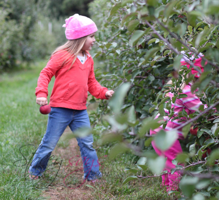 Apple/Berry Picking