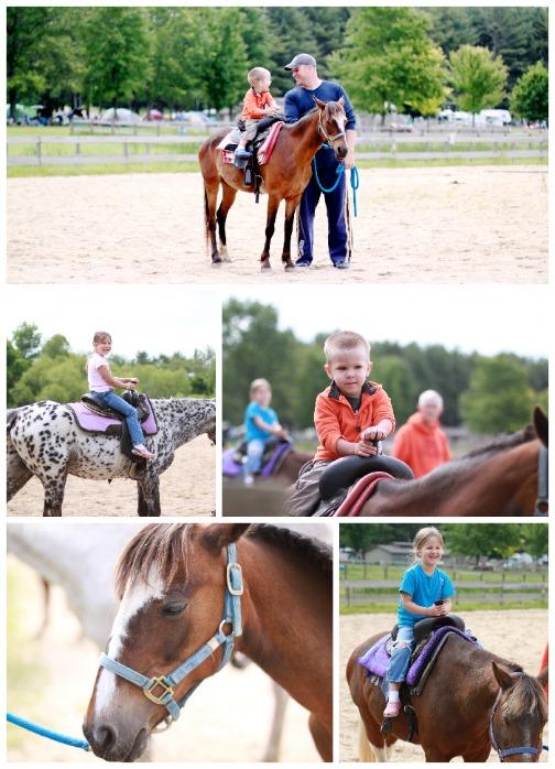 cranhill_horses