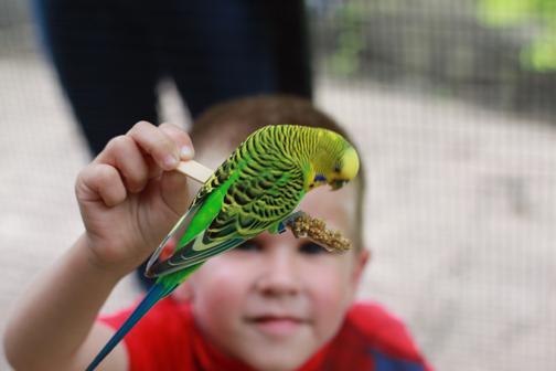 zootalonbird